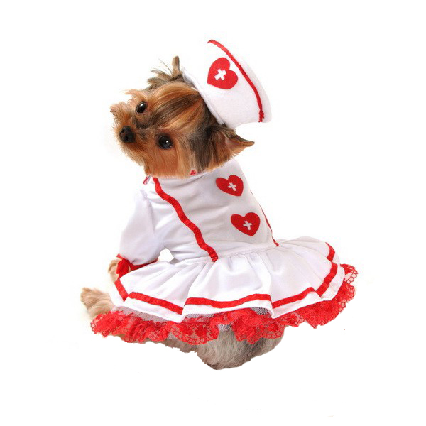 cutie-nurse-halloween-dog-costume-1.jpg