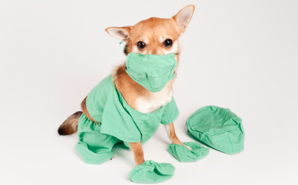 dog-wants-to-be-a-nurse.jpg