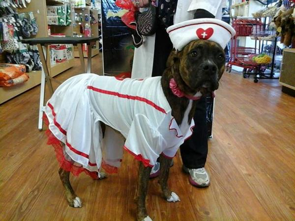 cutie-nurse-halloween-dog-costume-12286.jpg