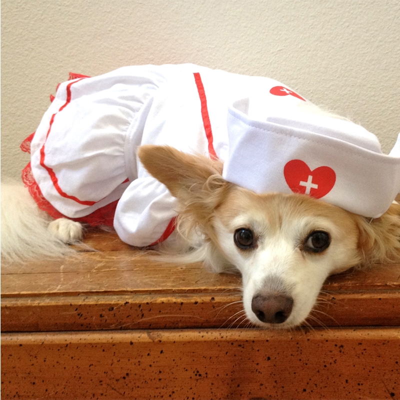 Sweet-Heart-Nurse-Dog-Costume-3.jpg