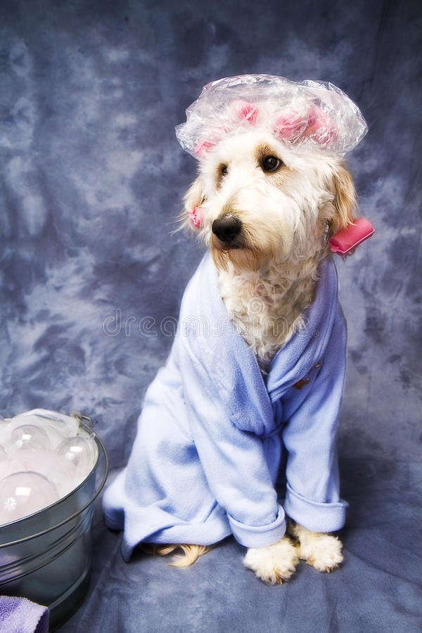 dog-shower-cap-18479091.jpg