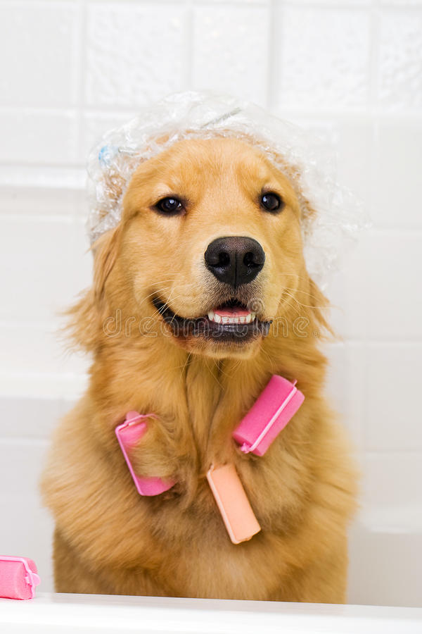 funny-dog-hair-curlers-shower-cap-23908606.jpg