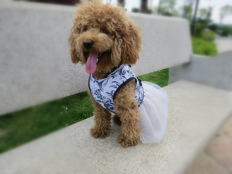 Chinese-New-Year-Dog-Dress-Spring-Summer-Dog-Clothes-Pet-Dresses-Skirt-Clothing-.jpg