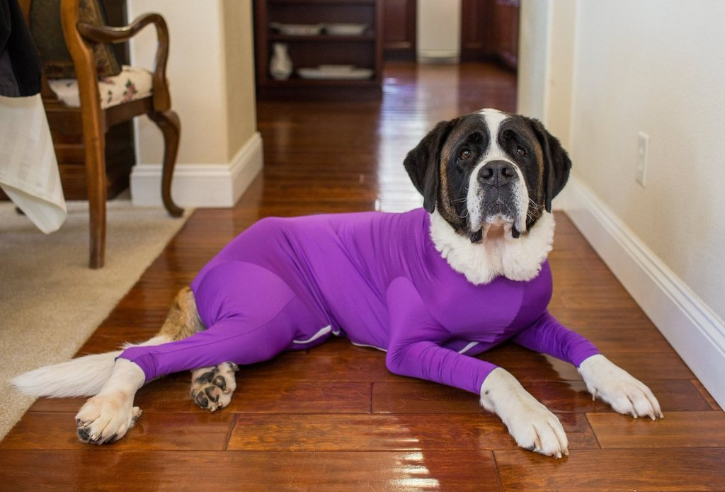 Shed-Defender-Dog-Leotards.jpg
