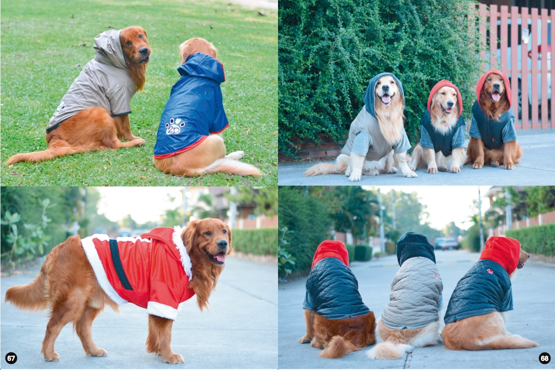 big-dog-clothes-01.jpg